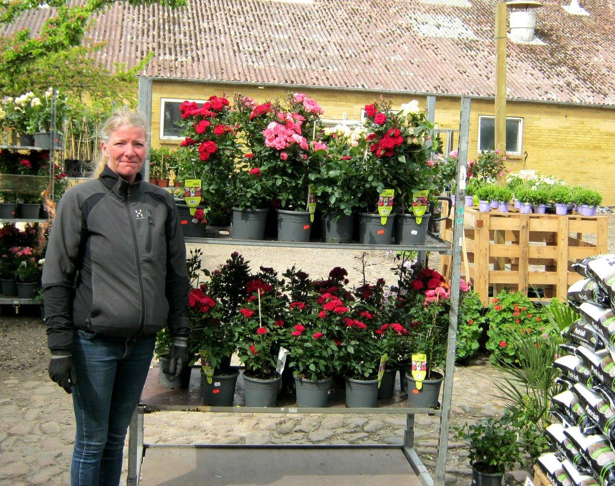 Skydebjerg blomster 5560 aarup - Steen ijzer smeden ...