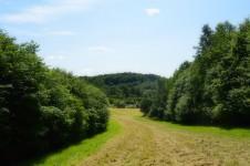 Rokkebjerg set fra Tokeskovsvej. Foto:MJ